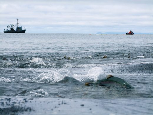 ForSea Solutions announces partnership with several major North American seafood companies